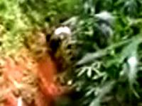 Student Caught Fucking At The Tall Grasses