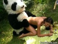 Panda having wild sex on a blanket
